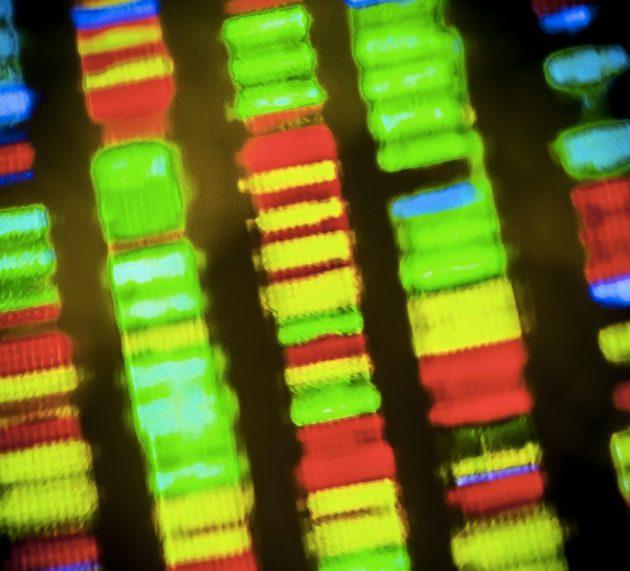 "The history of the ""Genesis Engine"", CRISPR"