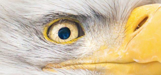 Scientists 3D print an Eagle eye camera that's smaller than a human hair