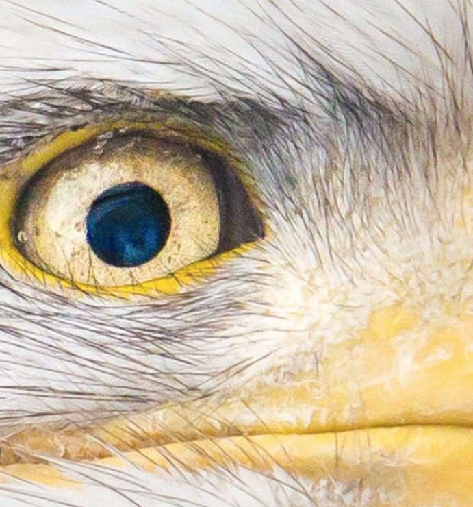 Scientists 3D print an Eagle eye camera that's smaller than a human hair