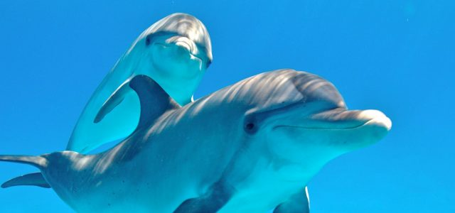 By 2021 this AI could help us talk to dolphins