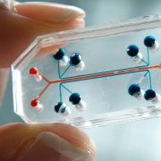 """The FDA begins """"Humans on Chips"""" trials to replace animal testing"""