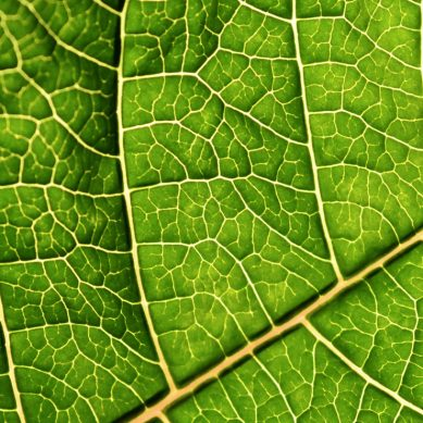 Bionic leaf could revolutionise energy and manufacturing