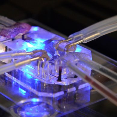Human on a chip development signals the end of animal testing