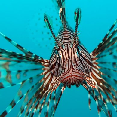 Florida to unleash Lionfish hunter-killer robots onto its reefs
