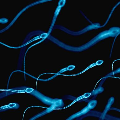 Artificial sperm breakthrough gives infertile men new hope