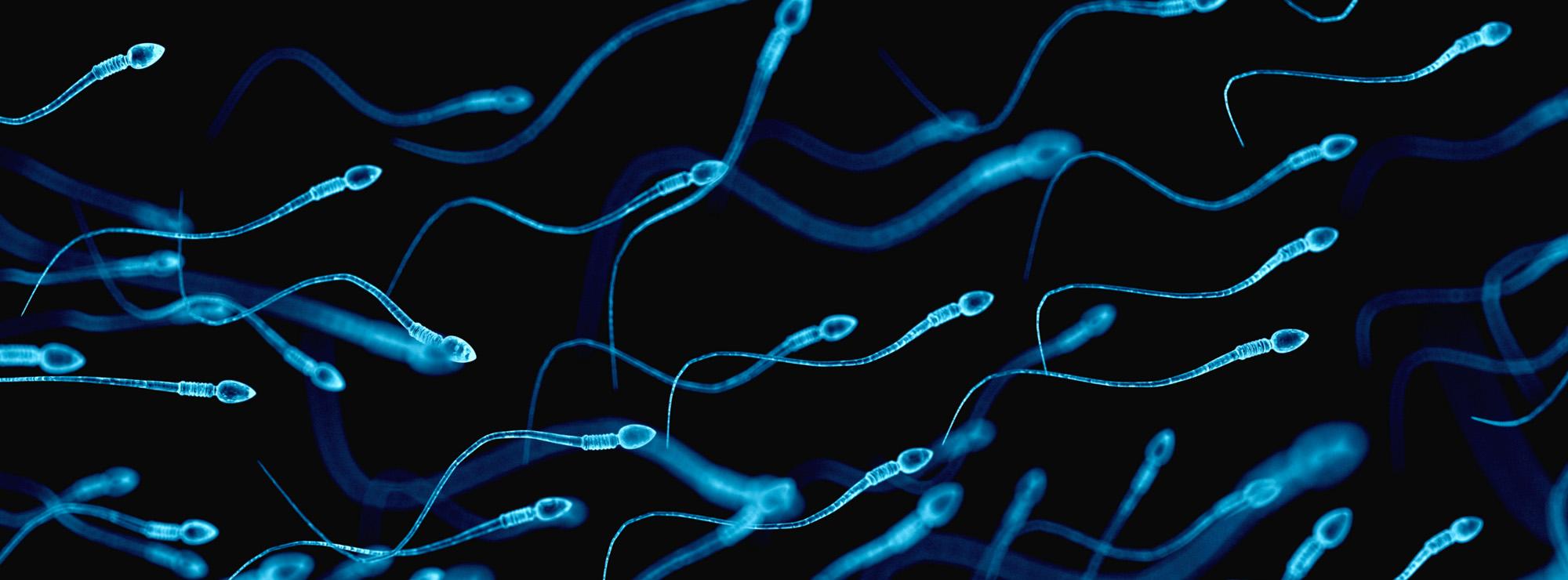 Artificial sperm breakthrough gives infertile men new hope – Fanatical Futurist by International Keynote Speaker Matthew Griffin