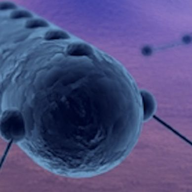 Scientists use brain controlled DNA nanobots to release drugs inside roaches