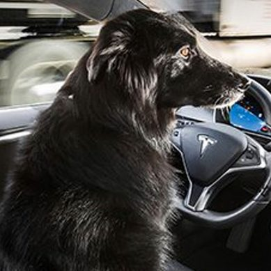 Musk: Telsa's first fully autonomous car to appear within six months