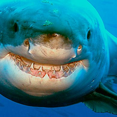 New shark spotter algorithm saves lives, and sharks