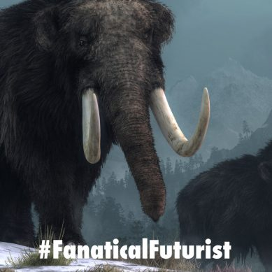 Scientists bring 28,000 year old woolly mammoth cells back to life